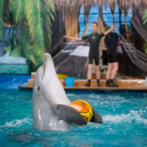 Дельфинарии, океанариумы Темрюка