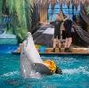 Дельфинарии, океанариумы в Темрюке