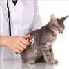 Ветеринарные клиники в Темрюке